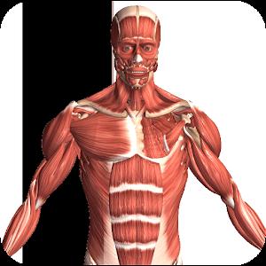 Download Visual Anatomy 2 APK