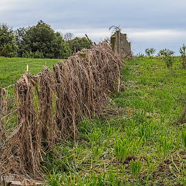 grass covered fence by Vibeke Friis - Landscapes Prairies, Meadows & Fields ( fence, grass hanging, last flood )