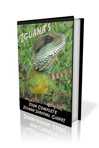 Complete Iguana Survival Guide