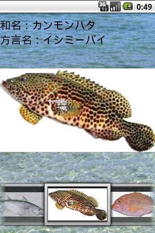 【免費娛樂App】沖縄釣魚図鑑-APP點子