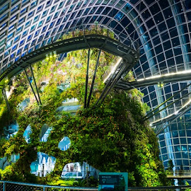 Cloud Forest Dome by Chester Chen - Buildings & Architecture Other Interior ( pano, bay, futuristic, gardens, dome, cloud, forest, gardensbythebay, singapore )