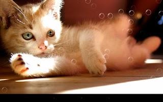 Screenshot of Lazy Cat Live Wallpaper