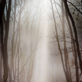 Misty forest by Dobrinovphotography Dobrinov - Landscapes Forests ( illuminated, walking, fairy tale, beach tree, bright, tranquil scene, falling, landscape, creativity, hiking, exploration, mistery, inspiration, tree, nature, exploding, pine tree, vibrant color, no people, dark, spirituality, sunbeam, loneliness, heaven, majestic, scenics, ethereal, temptation, forest, beauty in nature, sunlight, morning, vitality, wilderness area, magic, fog, branch, sunrise, shade, mist,  )