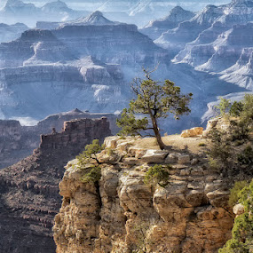 Grand Canyon II by Kai Buddensiek - Landscapes Mountains & Hills ( landschaft, tree, 17-55, landscape, usa, grand canyon )