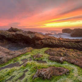 Green with Envy by Eric Terhorst - Landscapes Beaches