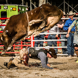 Uh-Oh by Troy Wheatley - Sports & Fitness Rodeo/Bull Riding ( cowboy, arena, rodeo, dirt, bull )