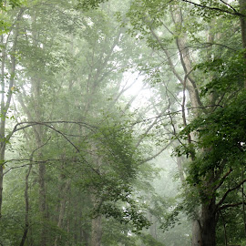 . by Brittany Ritchea - Landscapes Forests