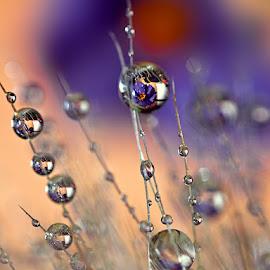 by Carlos De Sousa Ramos - Nature Up Close Natural Waterdrops
