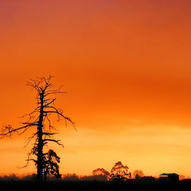 Dead Tree by Winkie Chau - Nature Up Close Trees & Bushes ( highway, sunset, lamdscape, new zealand, dead tree,  )