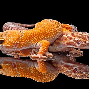 Move away, dude..!! by Aditya Permana - Animals Reptiles (  )