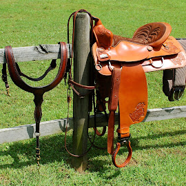 Tack by Philip Molyneux - Artistic Objects Other Objects ( bridle, saddle, riding, horse, tack )