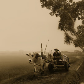 Morning Village by Jalutajam Photoworks - People Street & Candids ( farmer, village, fresh, cow, morning )