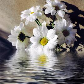 white flowers by LADOCKi Elvira - Digital Art Things ( nature, color, flowers, garden )