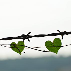 Leaves of love by Yogesh Kumar - Nature Up Close Leaves & Grasses ( love, twin, wire, green, leaves, Free, Freedom, Inspire, Inspiring, Inspirational, Emotion )
