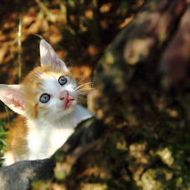 Wondering by Aris Arianto - Animals - Cats Kittens (  )
