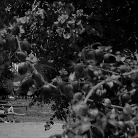 Photography on Facebook Black and White Photography Redenção Porto Alegre by Ita Pritsch Simões Pires - People Couples ( public, bench, furniture, object )