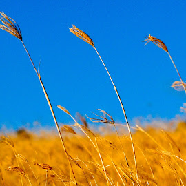 OLYMPUS DIGITAL CAMERA by Etienne Stassen - Landscapes Prairies, Meadows & Fields