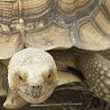 Turtle Puzzles icon