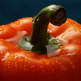 Bell Pepper Closeup by Sanjib Paul - Food & Drink Fruits & Vegetables ( orange, color, blue, food, vegetables, bell pepper )