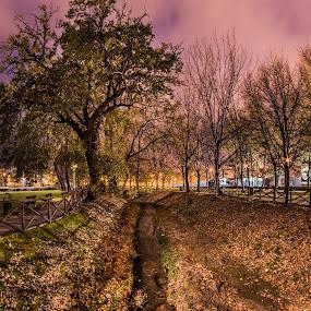 Salerno, Parco del Mercatello @ Night by Sabrina Campagna - City,  Street & Park  Night ( parco, park, lunga esposizione, salerno, nightscape, campania, night photography, nature, tree, mercatello, night, long exposure, italy,  )