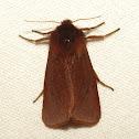 Ruby Tiger Moth