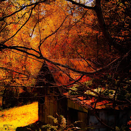 by Chris Martin - Buildings & Architecture Other Exteriors ( fall, color, colorful, nature,  )