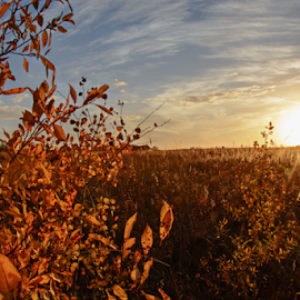 Fall Prairie Sunset by Jill Beim - Landscapes Prairies, Meadows & Fields ( autumn, sunset, fall, landscapes, color, colorful, nature )