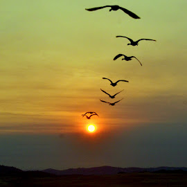 Migrating Geese by Brian Blood - Landscapes Sunsets & Sunrises ( nature, sunset, landscape, geese,  )