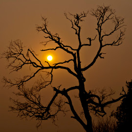 Sun Behind the Tree by Adnan Ali - Nature Up Close Trees & Bushes ( adnan ali, nature, tree, light, sun )
