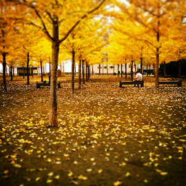 Autumn Bliss by Rachel Towle - Instagram & Mobile iPhone ( park, autumn, trees, yellow, leaves )