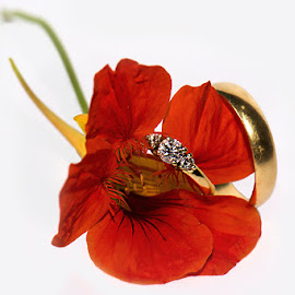 by Christa van Rooyen - Wedding Details ( orange, his, bright, hers, wedding rings )