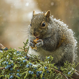 A Treat In The Snow by Sue Matsunaga - Novices Only Wildlife