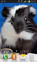 Screenshot of Funny rodents live wallpaper