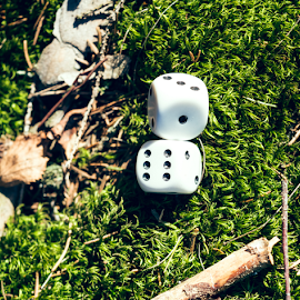 Dice game in the nature by Denny Gruner - Artistic Objects Toys ( loss, pair, moss, chance, throwing, colour, risk, throw, dice, roll, nature, isolated, symbol, luck, play, random, white, number, game, gambling, lose, two, bet, background, forest floor, cube, success )