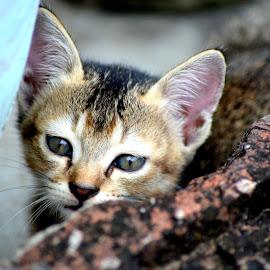 Hide & seek by Pritam Joardar - Animals - Cats Kittens