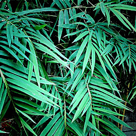 Bamboo by Janette Ho - Nature Up Close Other plants (  )