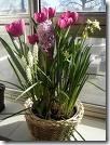 bulb planting2