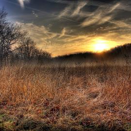 Misty Sunrise by Mark Six - Landscapes Prairies, Meadows & Fields ( field, sunset, meadow, forest, sunrise, landscape,  )