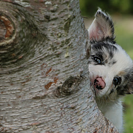 Hide and seek by Marjan Smit - Animals - Dogs Puppies