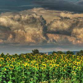 Fields.. Tower.. Clouds.. by Željko Salai - Landscapes Prairies, Meadows & Fields