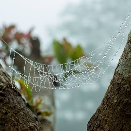 Dew pearled cradleSeason: Winter of Bangladesh35mm on Nikon D90 by Aktar Ratan - Nature Up Close Hives & Nests