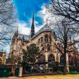 Notre Dame by Andrea Conti - Buildings & Architecture Public & Historical ( paris, gothic, park, church, notre dame, exterior, buildings, france, cathedral, architecture )