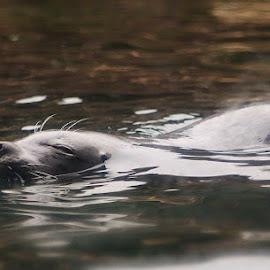 by Debbie Slocum Lockwood - Animals Sea Creatures