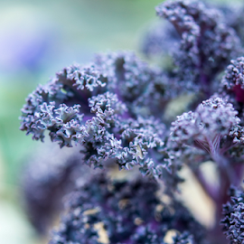 by Andi Zero - Nature Up Close Other plants ( macro, purple, flower,  )