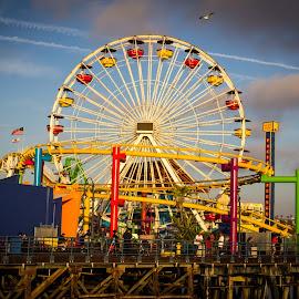 Santa Monica Carousel by Danijel Grlic - City,  Street & Park  Amusement Parks ( colourfull, amusement park, california, carousel, santa monica pier )