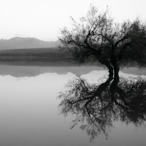 by Cornelis Cornelissen - Black & White Landscapes