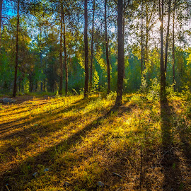 Mt. Sunrise by Assi Dvilanski - Landscapes Sunsets & Sunrises ( sunrises, mountain, grass, gilboa, sunrays, trees, forest, sunrise, sunlight, israel )