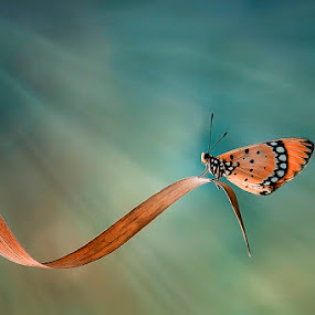 CAHAYA ALAM by Alonk's Roby - Animals Insects & Spiders ( macro butterfly indonesia insect, color, colors, landscape, portrait, object, filter forge,  )