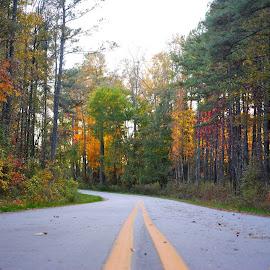 Backroads by Rhonda Brown - Landscapes Travel