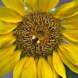 sunflower by Erin O'Daniel - Nature Up Close Gardens & Produce